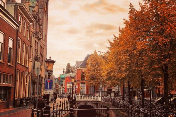 Busy Polska Holandia Utrecht transport od drzwi do drzwi